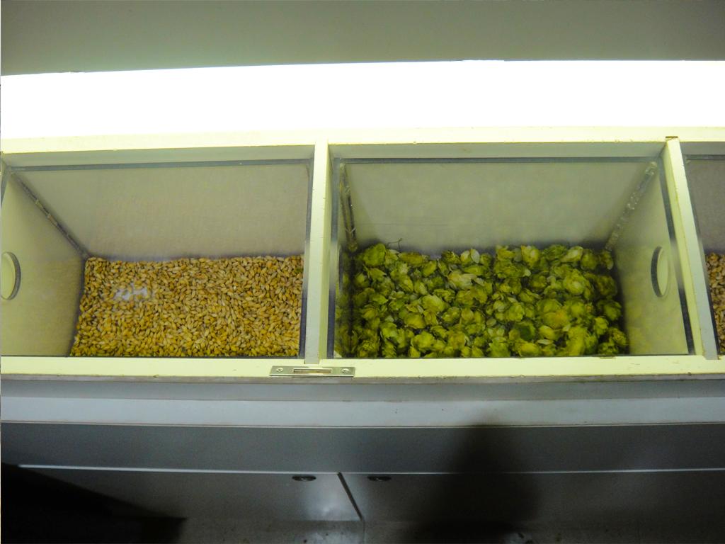 左が麦で右がホップ