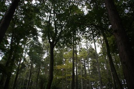 鬱蒼と茂る千葉の森林