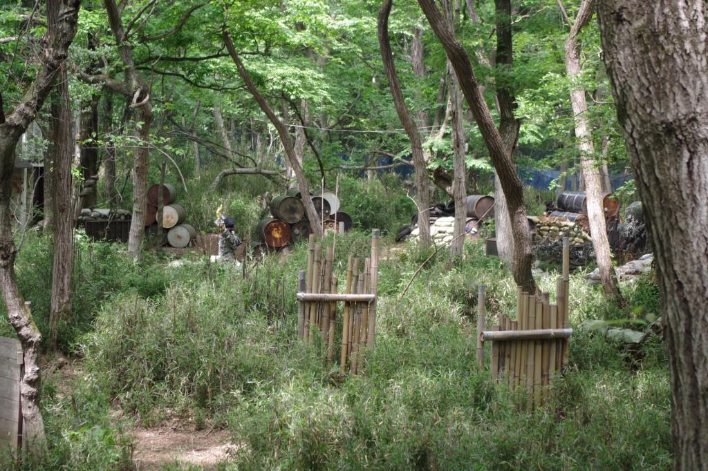 密林的なフィールドの風景。